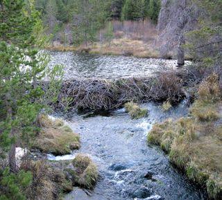 Beaverdam1_edited